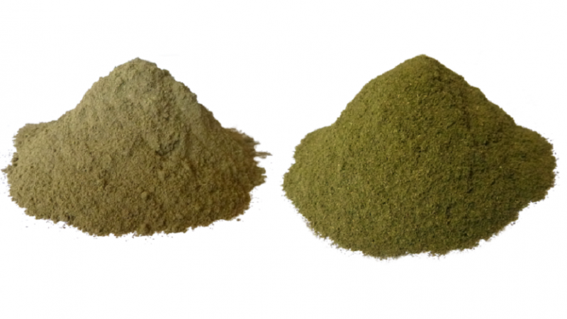 How does White Bali Kratom compare to the White Sumatra Strain