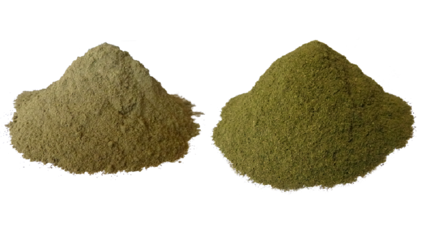 White Bali Kratom compare to the White Sumatra Strain